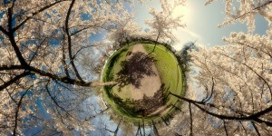 Little Planet, Le Printemps strasbourgeois